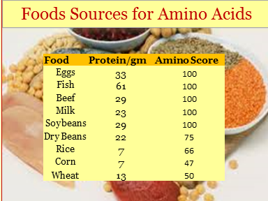 Food Sources for Amino Acids